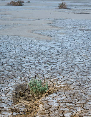 Dry Lake Photograph - Life In A Dry Place by Joseph Smith