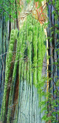 Life In A Redwood Forest Art Print