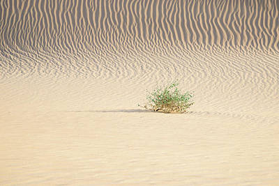 Photograph - Life In The Dunes by Alexander Kunz