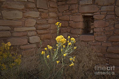 Photograph - Life In The Shadow Of The Desert Ruins by John Stephens