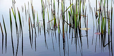 Photograph - Life In The Shallows by Debbie Oppermann
