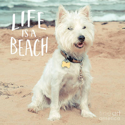 Cute Photograph - Life Is A Beach Dog Square by Edward Fielding