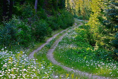 Photograph - Life Is A Journey On A Road Lined With Daisies by Karon Melillo DeVega