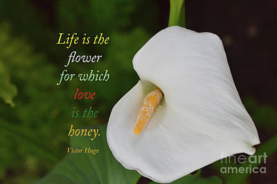 Photograph -  Life Is The Flower by Debby Pueschel
