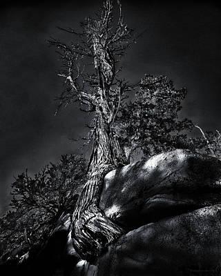 Photograph - Life Is Tribulation by Denise Dube