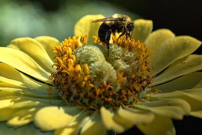 Photograph - Life Of A Bee by Carol Montoya