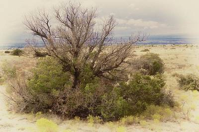 Photograph - Life Of A High Desert Juniper Pinyon by Flying Z Photography by Zayne Diamond