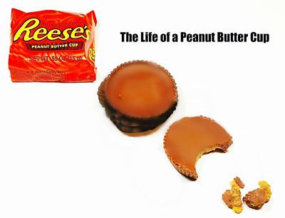 Photograph - Life Of A Peanut Butter Cup by Diana Angstadt