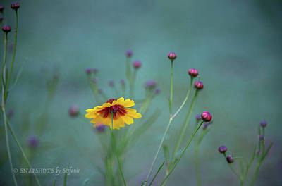 Photograph - Life Of A Wildflower by Stefanie Silva