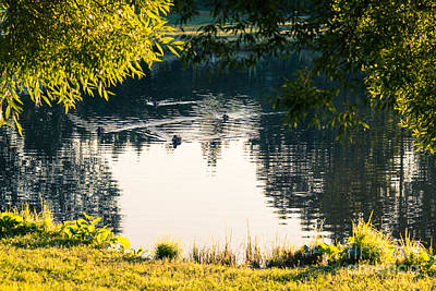 Photograph - Life Of The Duck Pond by Ismo Raisanen
