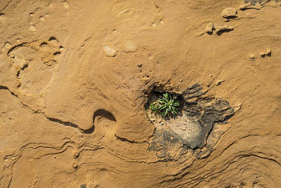 Photograph - Life On Bare Rock - Delicate Plants On Rough Limestone by Georgia Mizuleva