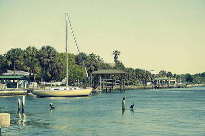 Cruising The Coast Wall Art - Photograph - Life On Crystal River by Laurie Perry