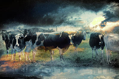 Photograph - Life On The Land - Cows by Sue Masterson
