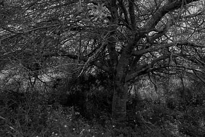 Photograph - Life. by Shlomo Zangilevitch