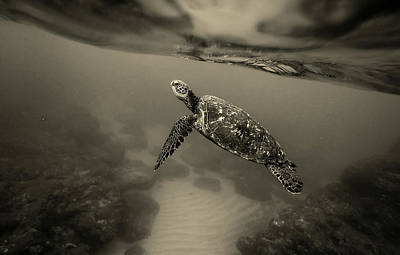 Photograph - Life Underwater by Unsplash