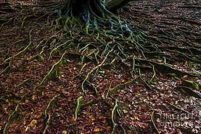Photograph - Life by Yuri Santin