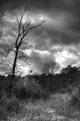 Photograph - Lifeless Tree by Deb Buchanan