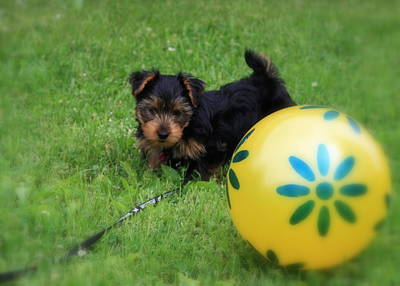 Photograph - Life's A Ball by Mary-Lee Sanders