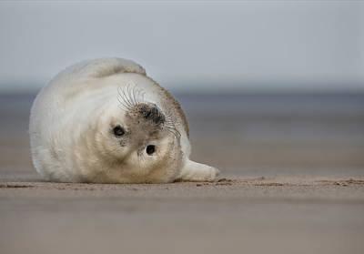 Ocean Mammals Photograph - Life's A Beach by Andy Astbury