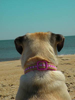Pug Photograph - Life's A Beach by Trish Tritz
