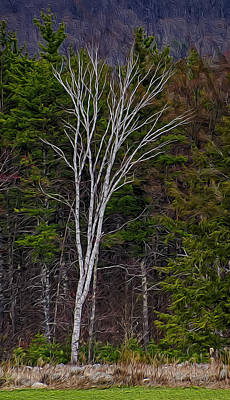 Photograph - Life's A Birch No.1 by Mark Myhaver