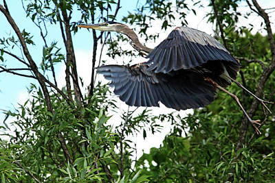 Photograph - Lift Off by Debbie Oppermann