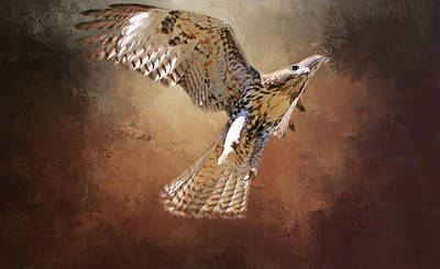 Red Tail Hawks Photograph - Lift Off by Donna Kennedy