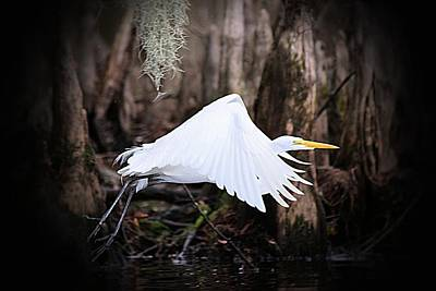 Photograph - Lift Off by Sheri McLeroy