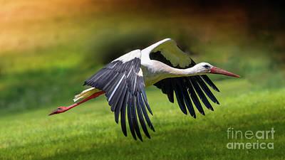 Stork Pyrography - Lift Up by Franziskus Pfleghart