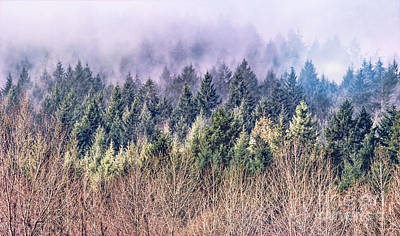 Photograph - Lifting Fog by Jean OKeeffe Macro Abundance Art