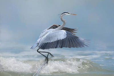 Photograph - Lifting Off by Donna Kennedy