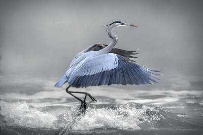 Photograph - Lifting Off - Selective Color by Donna Kennedy