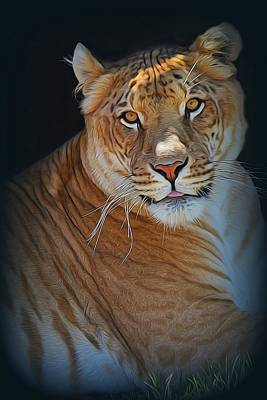Liger Relaxing Art Print by Diane Alexander