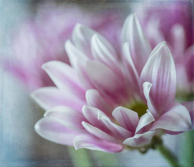 Photograph - Light And Airy by Teresa Wilson