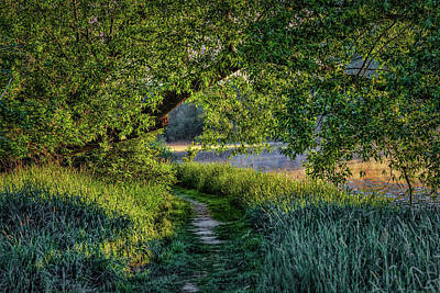 Photograph - Light And Green #h5 by Leif Sohlman