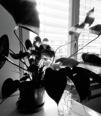 Photograph - Light And Shadow 11 by Mimulux patricia No