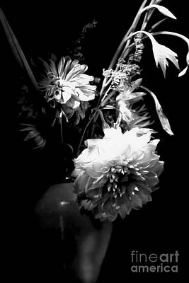 Photograph - Light And Shadow by Marcia Lee Jones