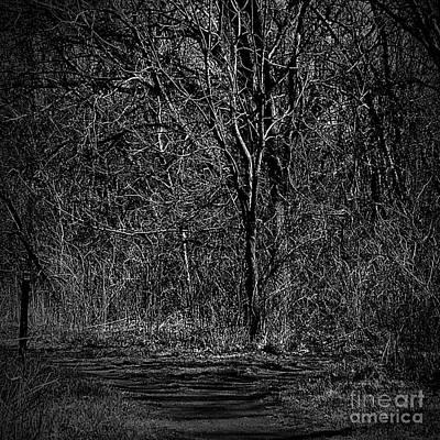Photograph - Light And Wood Monochrome by Frank J Casella