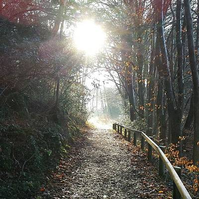 Pathway Photograph - Light At The End Of The Pathway by Andy Blackburn