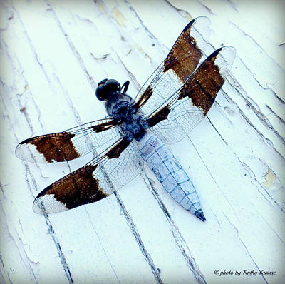 Photograph - Light Blue Dragonfly by Kathy M Krause