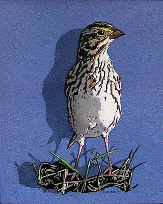 Painting - Light Capture Of Savannah Sparrow by TD Wilson