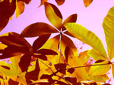 Painting - Light Coming Through Tree Leaves 1 by Amy Vangsgard