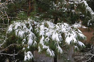 Photograph - Light Dusting Of Snow by Dale Powell