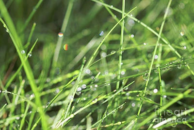 Photograph - Light Effects In Grass by Donna L Munro