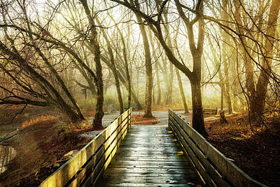 Photograph - Light Filled Path by Debra and Dave Vanderlaan