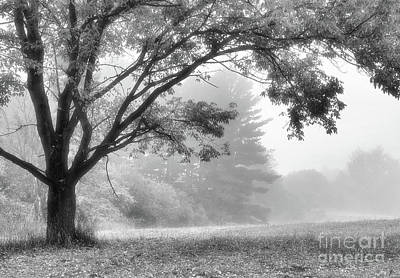 Photograph - Light Fog by Charles Owens