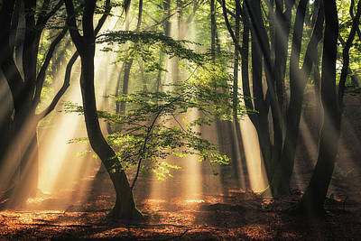 Photograph -  Light From Above by Edwin Mooijaart