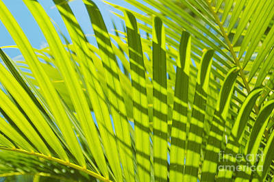 Photograph - Light Green Palm Leaves by Mary Van de Ven - Printscapes