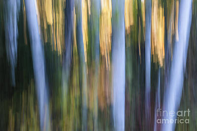 Impressionism Photos - Light in evening forest by Elena Elisseeva