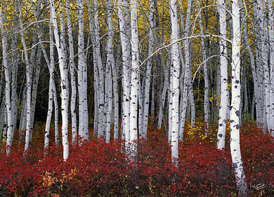Aspen Tree Photograph - Light In Forest by Leland D Howard